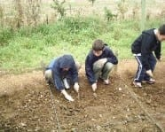 Pupils in the field excavating Roman remains