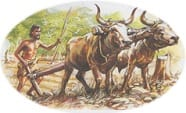 Stone Age man ploughing with oxen